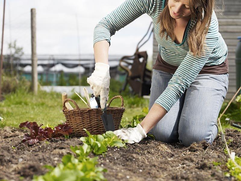 Удобряем огород 20 простых способв провереных временем