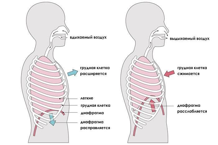 Как развить диафрагмальное дыхание?