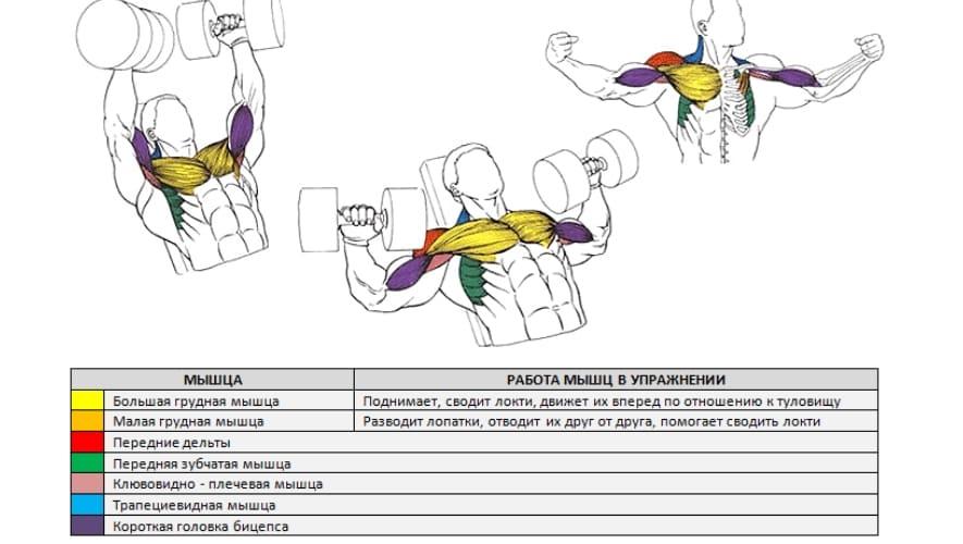 Жим свенда - техника выполнения олдскульного упражнения