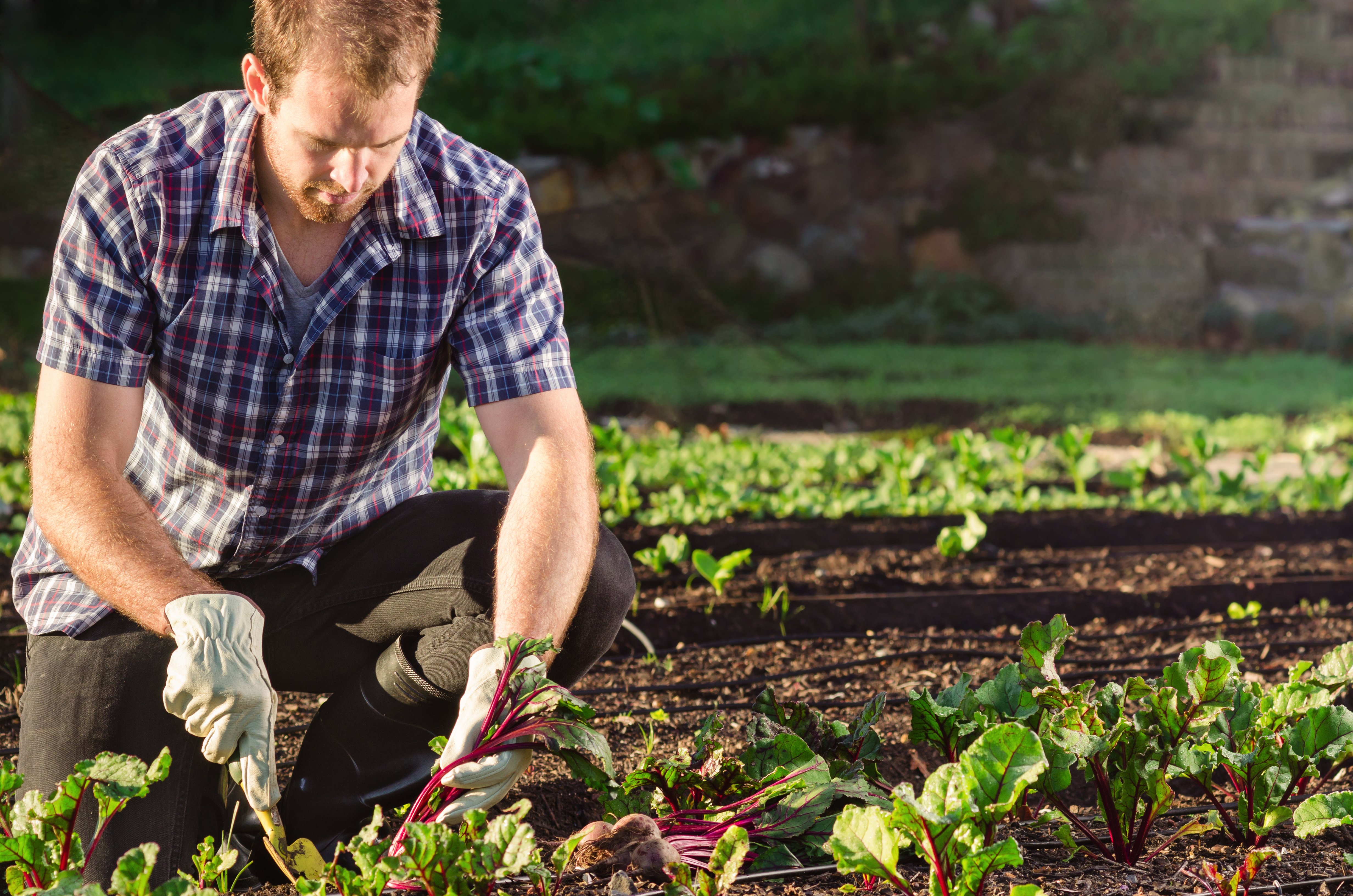 Личный опыт: 10 советов начинающим огородникам - огород, сад, балкон - медиаплатформа миртесен