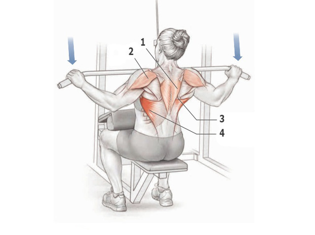 Как накачать спину в тренажерном зале: лучшие упражнения для большой и мощной спины и проработки всех групп мышц