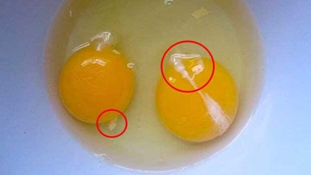 Как отделить желток от белка простыми и надёжными способами