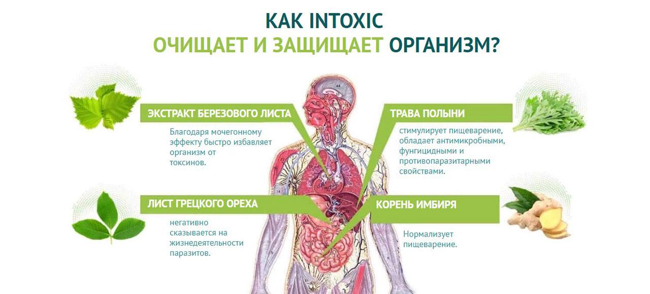 Время детокса: очищение организма от шлаков и токсинов в домашних условиях