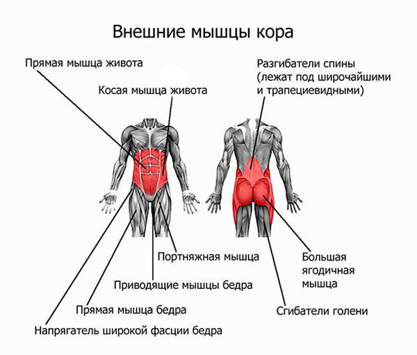 Мышцы стабилизаторы