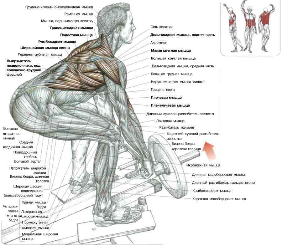 Эффективные упражнения на плечи в тренажерном зале и дома