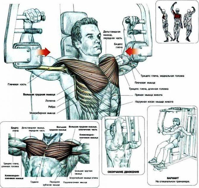 Тренажер пек дек (бабочка, peck-deck): виды и правильная техника упражнений на сведение рук
