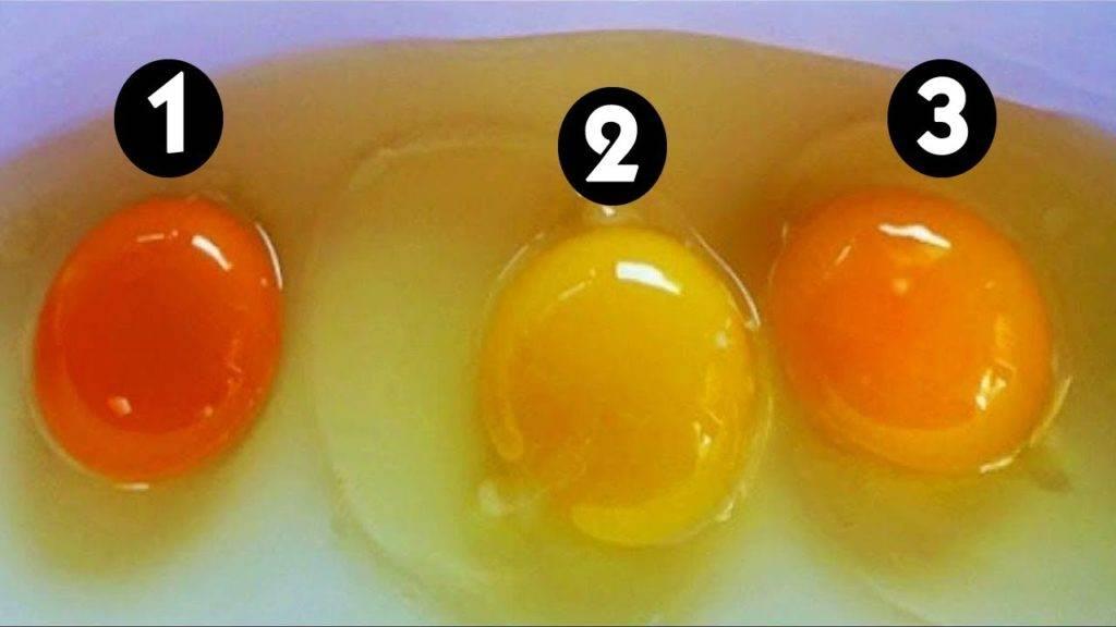 Цвет яичного желтка и как по нему определить самые полезные яйца