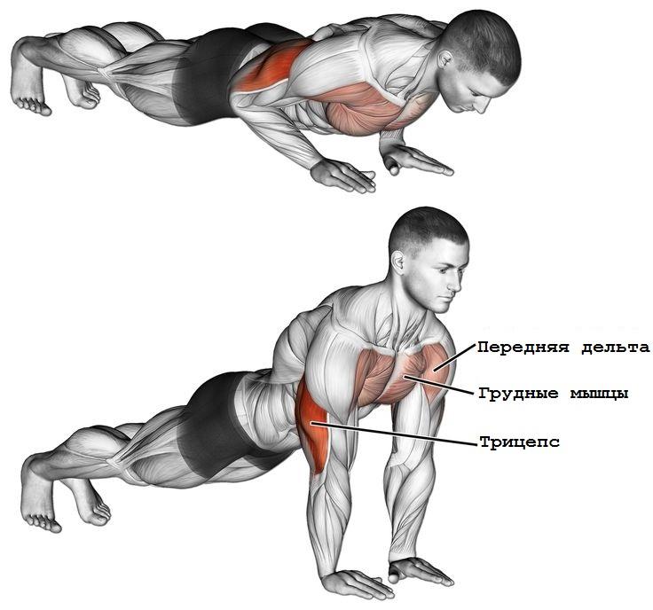 Отжимания от пола узким хватом: техника, какие мышцы работают