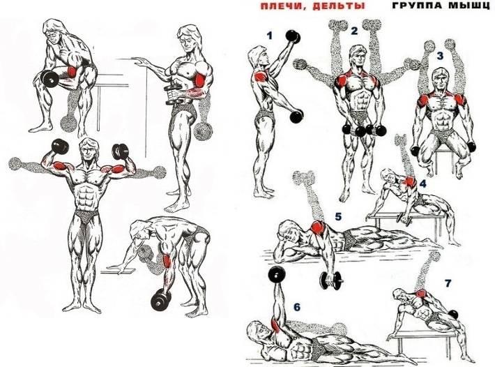 Топ-8 упражнений с гантелями на плечи (дельты) для дома и зала