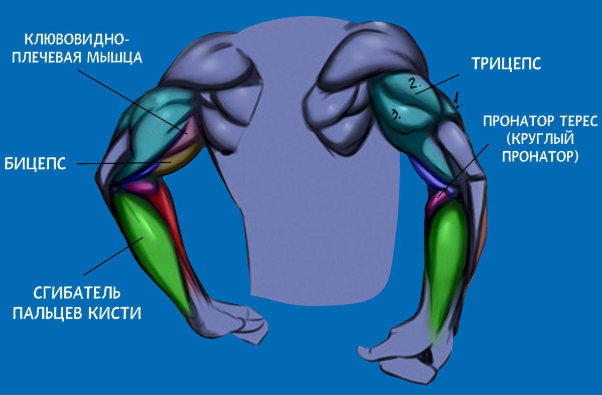 Тройной штурм: тренировка трицепсов и бицепсов - dailyfit