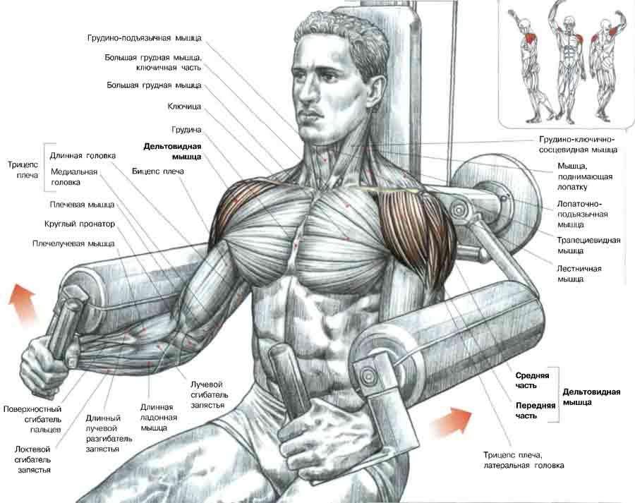 Упражнения на заднюю дельту, придающие плечам красивую форму