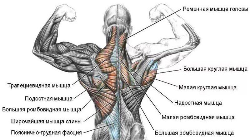 Разгибатели спины: техника выполнения упражнений, эффективность, советы тренеров - tony.ru