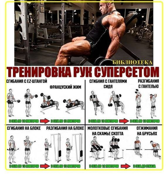Упражнения на трицепс: эффективные принципы и программы тренировок