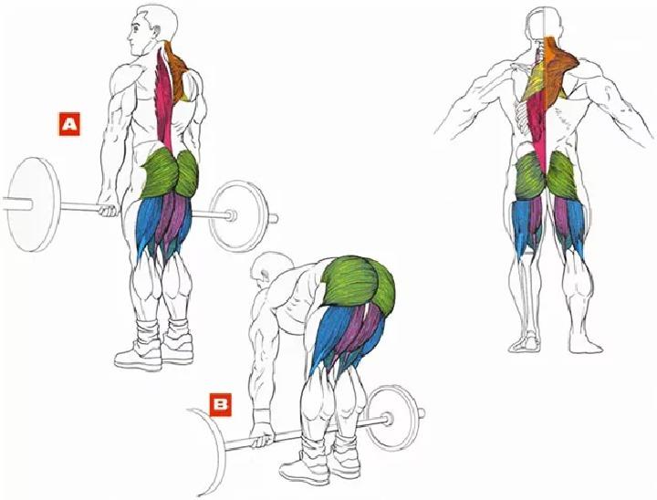 Фитнес и бодибилдинг для начинающих: особенности тренировок для новичков