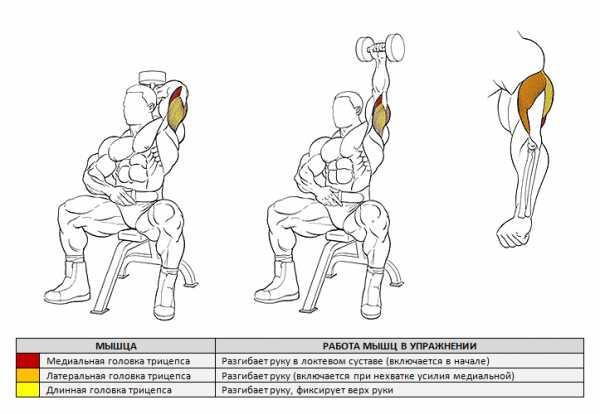 Как накачать плечи гантелями: топ 6 упражнений, рекомендации и план тренировки