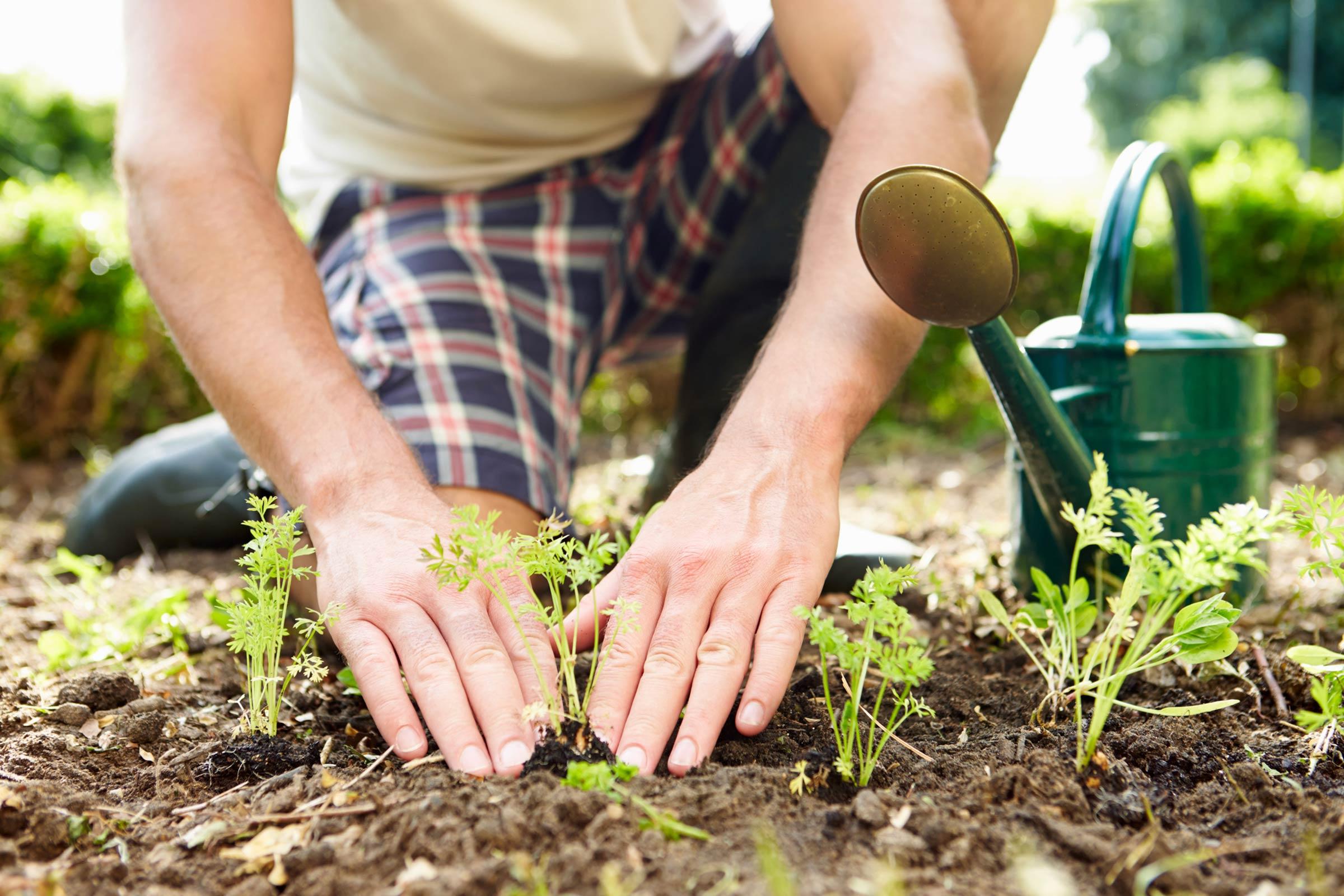 Как правильно работать на огороде?