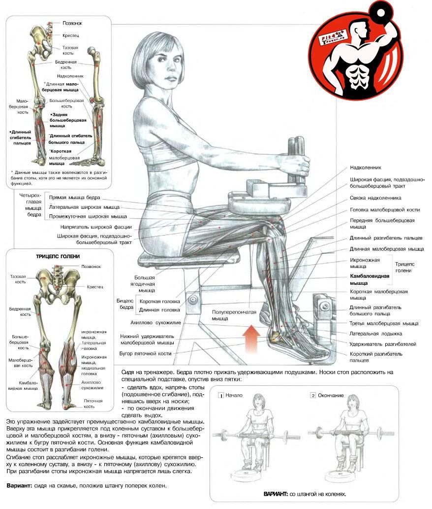 Отведение ноги в кроссовере: техника выполнения махов в тренажёре   rulebody.ru — правила тела