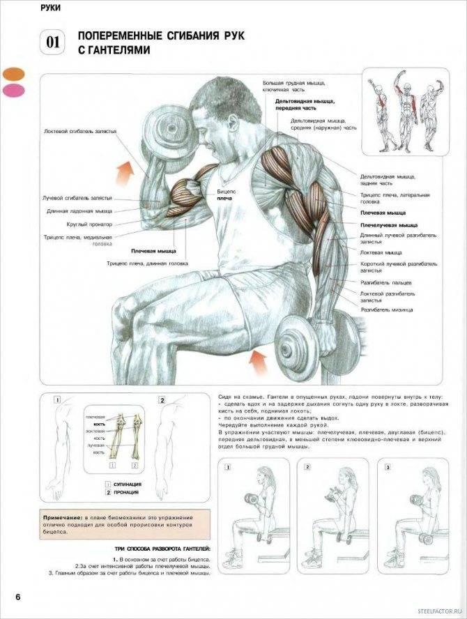 Упражнения на трицепс в тренажерном зале для мужчин