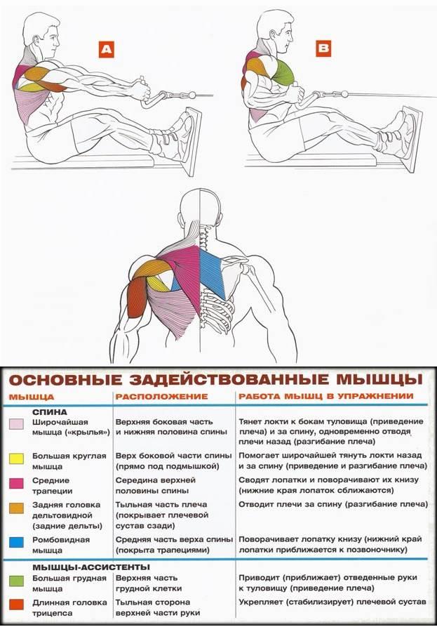 Тяга блока к груди – 79 фото как правильно делается данный комплекс упражнений