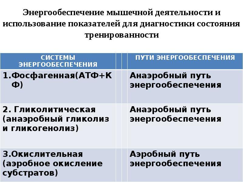 Энергетический обмен или откуда берется энергия для организма? | maximbuvalin.ru