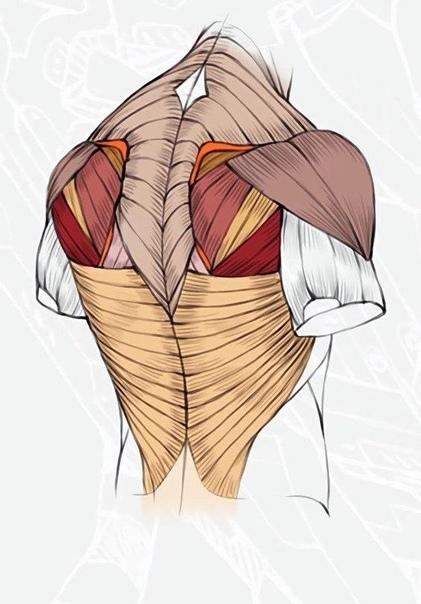 Квадрицепс: лучшие упражнения на мышцы передней поверхности бедра