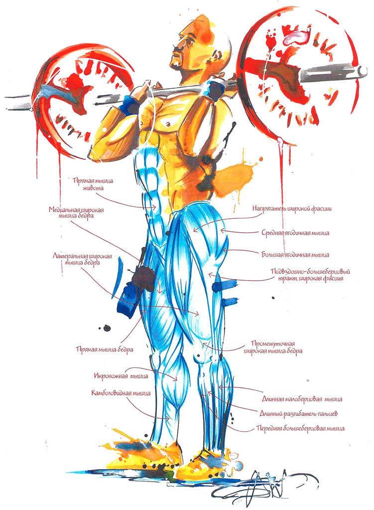 Жим штанги над головой: полное руководство с разбором техники