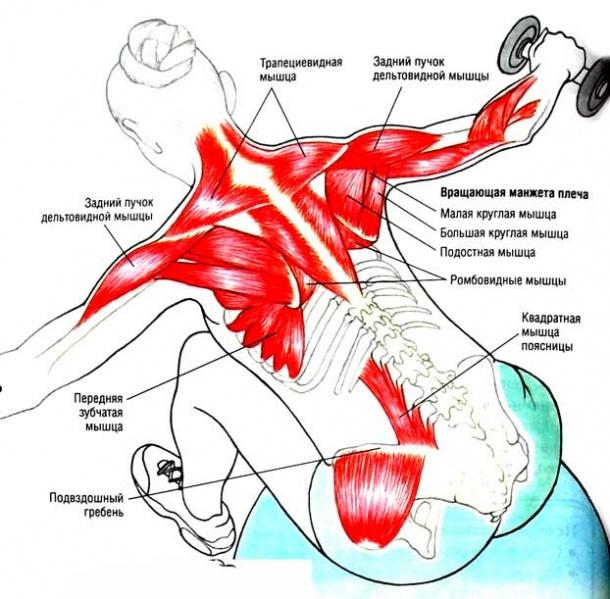 Тренировка мышц-стабилизаторов или как работать с «системой безопасности» суставов — часть 2
