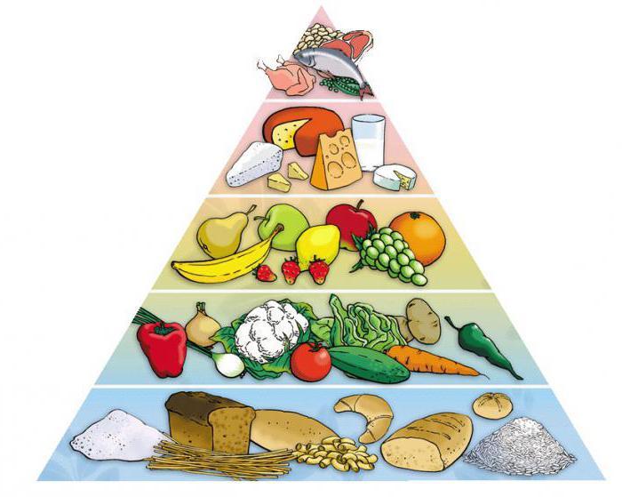 Пирамида питания – система борьбы с лишним весом, разработанная американскими диетологами
