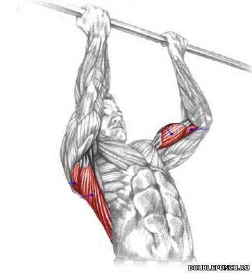 Какие мышцы качаются при подтягиваниях обратным хватом: польза и вред этого упражнения