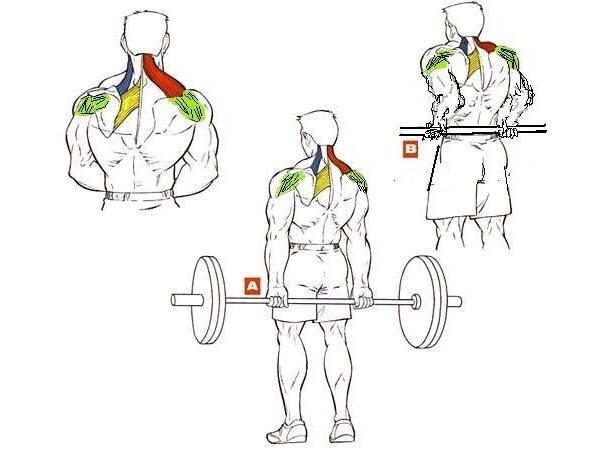 Шраги. техника выполнения упражнения и разновидности.