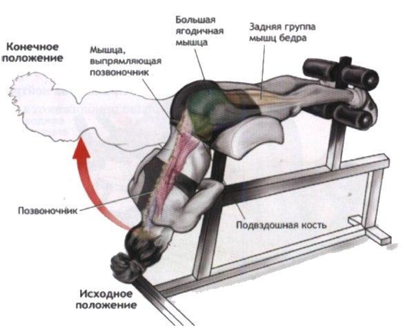 Упражнения для укрепления поясницы, комплекс