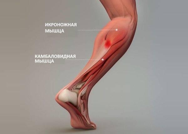 Многораздельные мышцы поясницы: анатомия, функции и упражнения