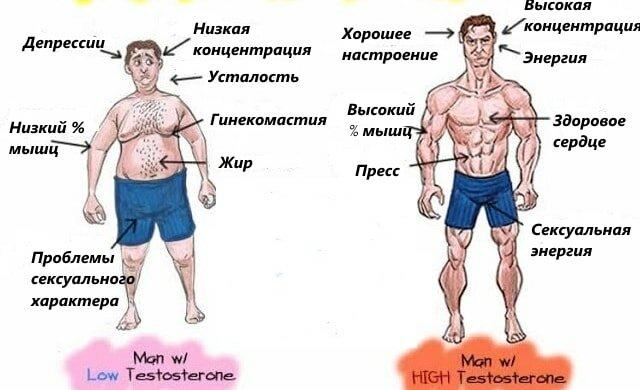Тестостерон низкий у женщин: причины, симптомы, диагностика