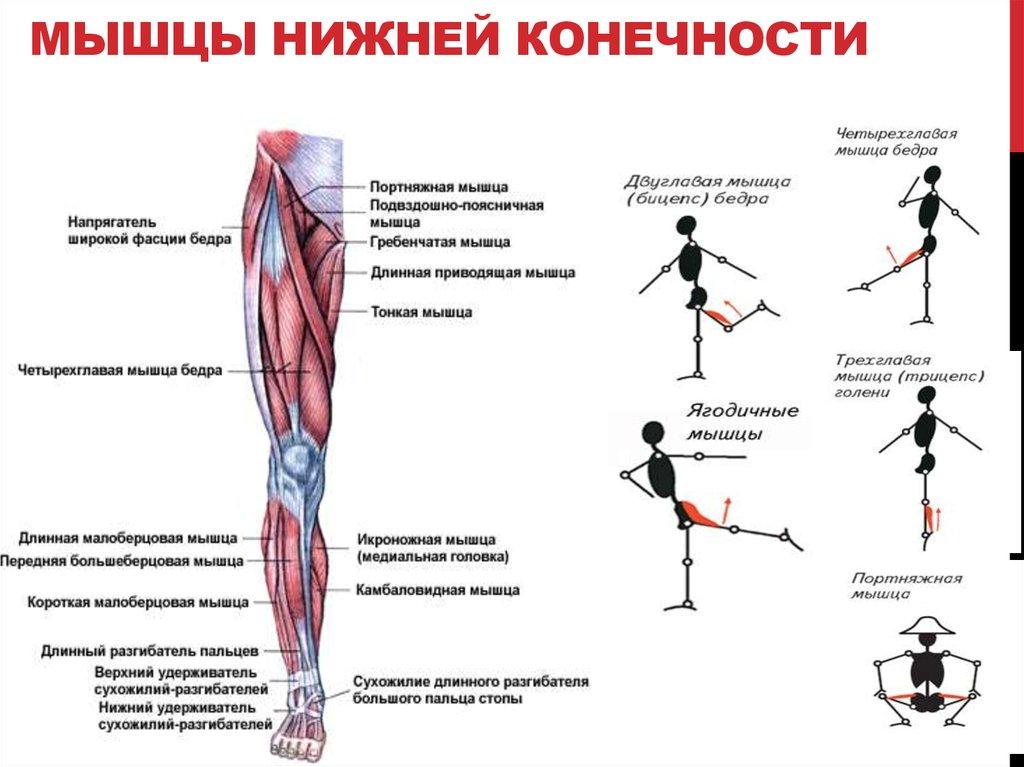 Упражнения для силы рук