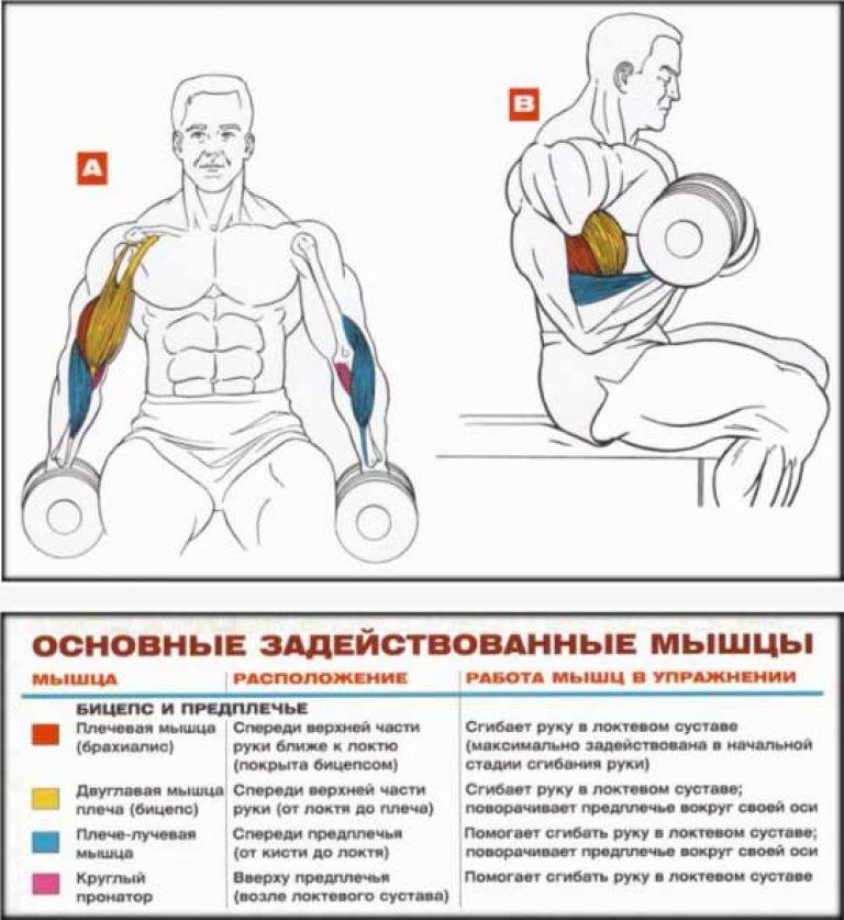 Упражнения с гантелями дома ✅ смотреть онлайн на solojumper.ru