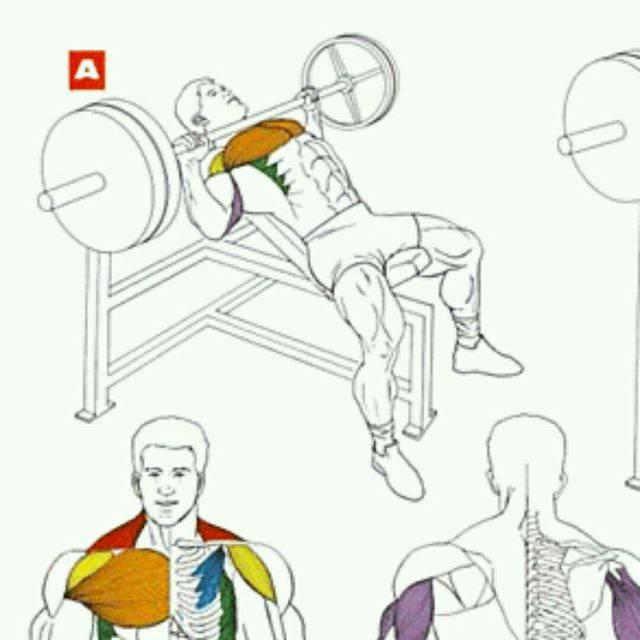 Жим штанги на наклонной скамье: фото и видео упражнения