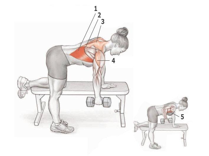 Тяга гантели в наклоне одной рукой: какие мышцы работают, техника выполнения