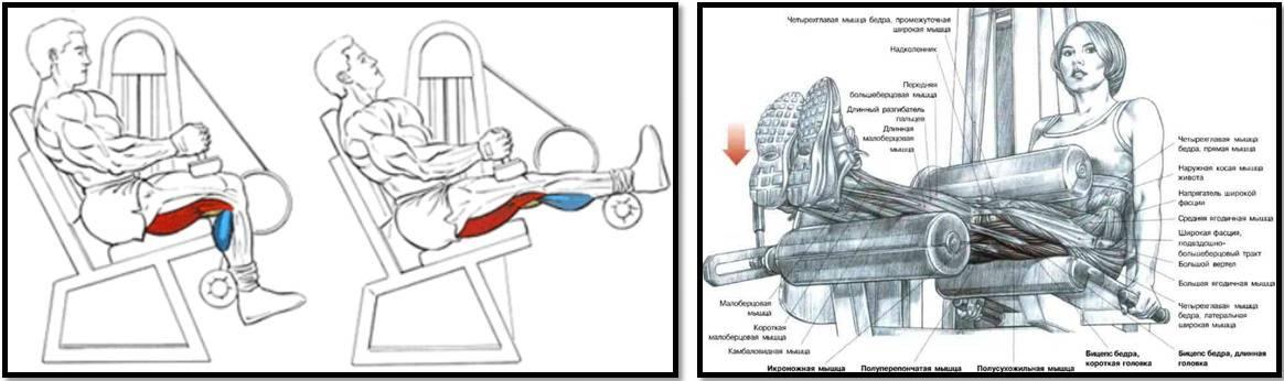 Сведение ног в тренажере: техника выполнения сидя для мужчин и женщин