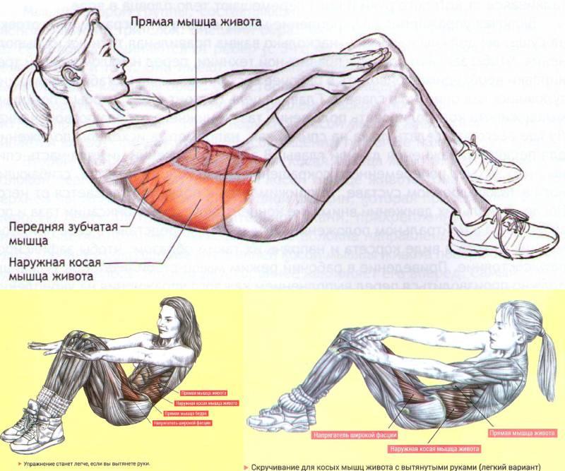 Как сделать пресс с картинки: косые мышцы живота