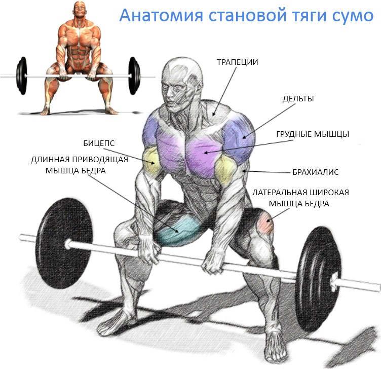 Становая тяга: техника выполнения со штангой для мужчин, какие мышцы работают, виды тяг