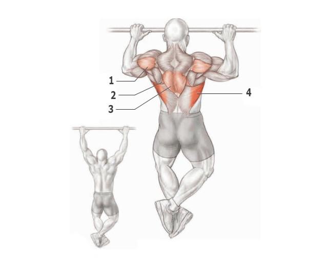 Упражнения без осевой нагрузки на позвоночник: список | бомба тело