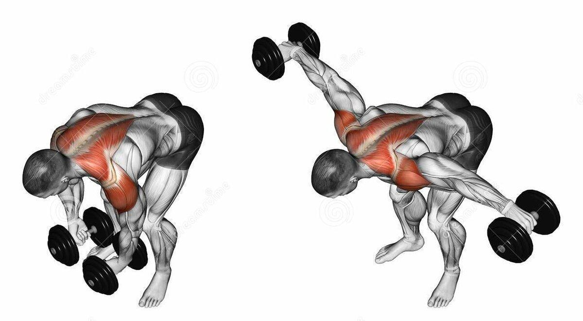 Упражнения для спины с гантелями - выбираем самые эффективные!