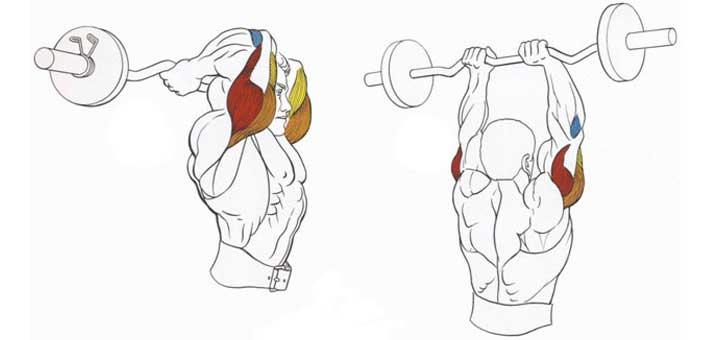 Жим штанги из-за головы: как делать, какие мышцы работают, рекомендации