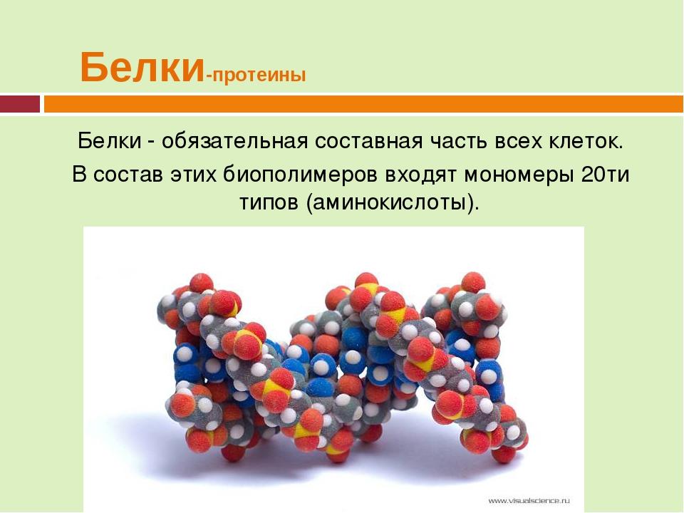 12 удивительных полезных свойств белка для организма человека