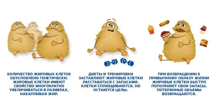 Куда уходит жир при похудении?