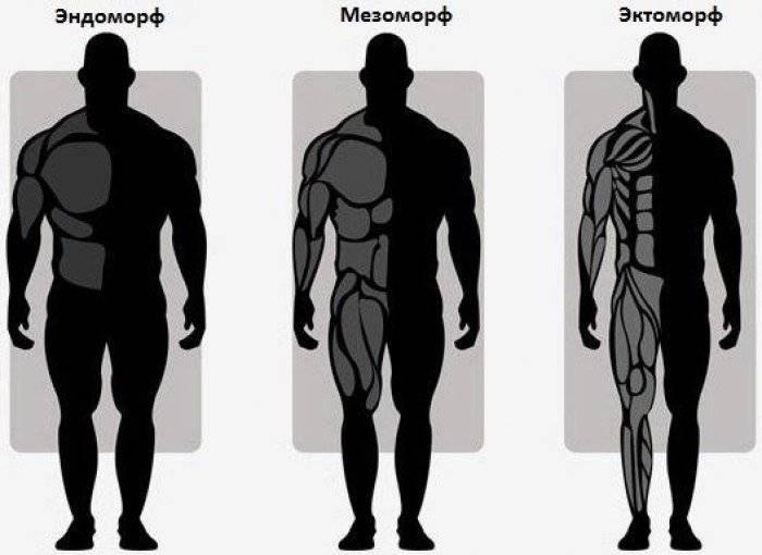 Кто такие эндоморфы?