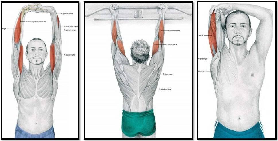 Растяжка рук: какие упражнения делать, чтобы растянуть бицепс, трицепс и предплечье