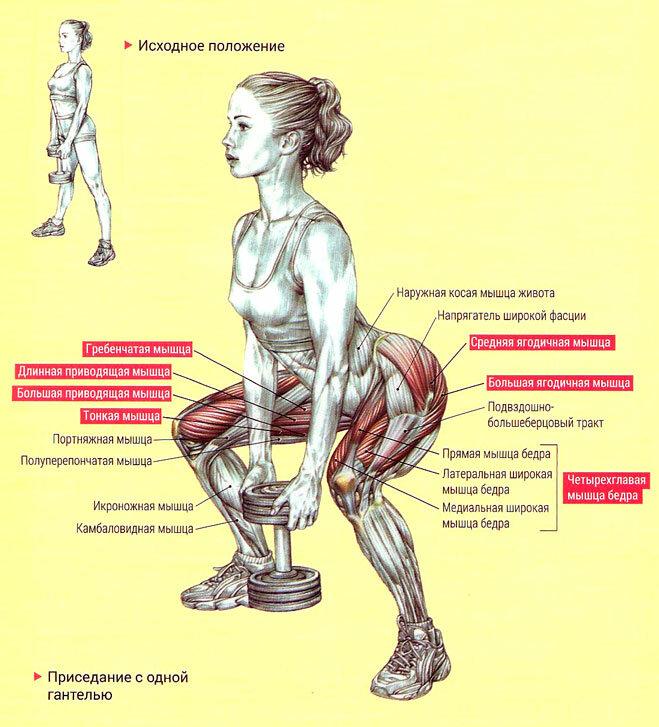 Приседания со штангой на плечах: разбор техники выполнения | rulebody.ru — правила тела