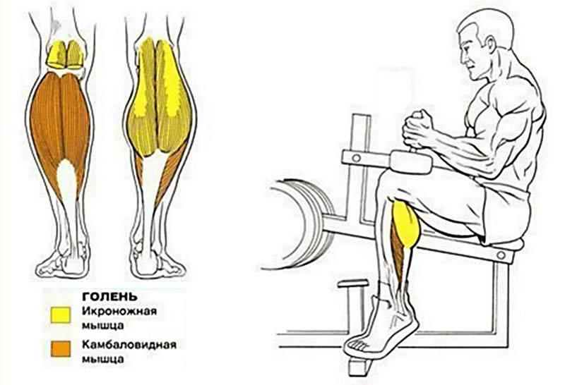 Подъем на носки с гантелями: описание упражнения с фото, пошаговая инструкция выполнения, проработка мышц ног - tony.ru
