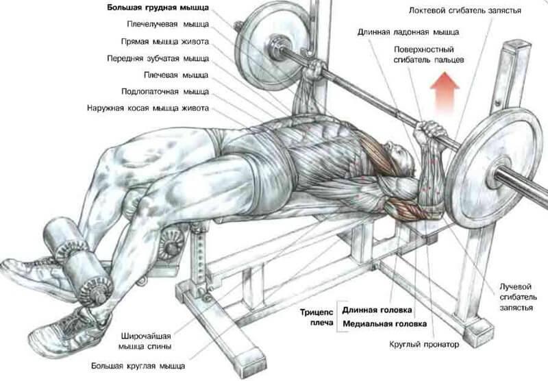 Топ-30 статических упражнений + готовый план (с фото)
